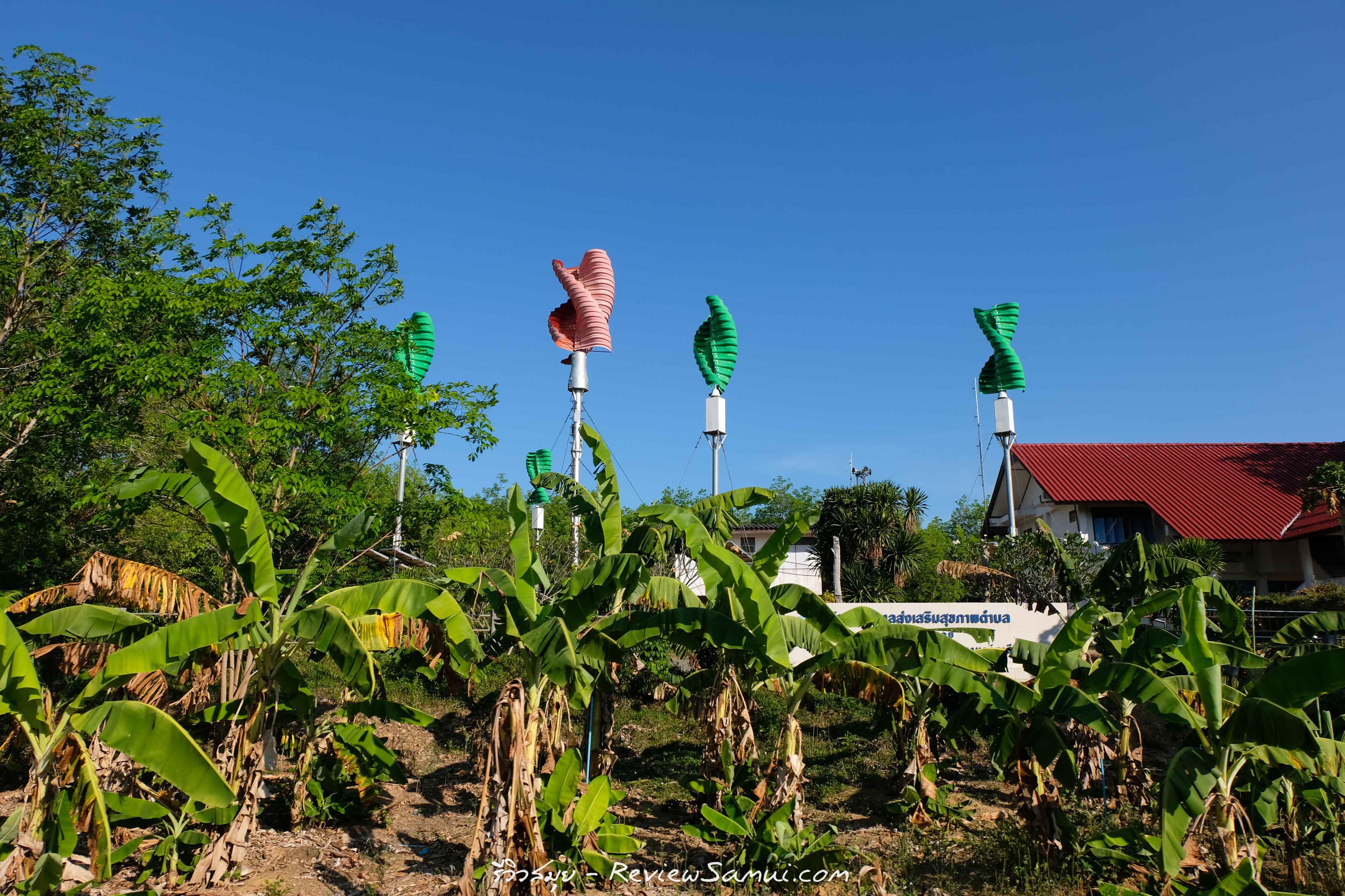 เกาะพลวย รีวิวสมุย | Review samui